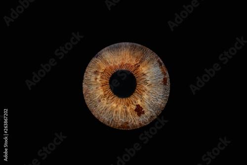 Keuken foto achterwand Iris Iris 1