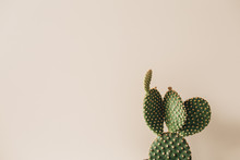 Closeup Of Cactus On Beige Bac...