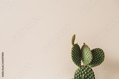 Closeup of cactus on beige background Fototapete