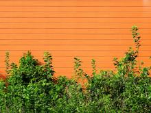 Orange Wall With Green Tree