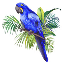 Hyacinth Macaw Parrot Sitting On Tropical Palm And Banana Leaves. Watercolor Illustration On White Background.