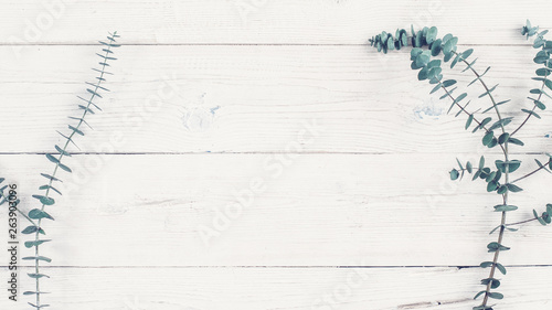 Floral and natural decor concept. Flat lay of green plant twig on white wooden background. Copy space. #263903096