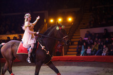 Performance Of Horses In The C...