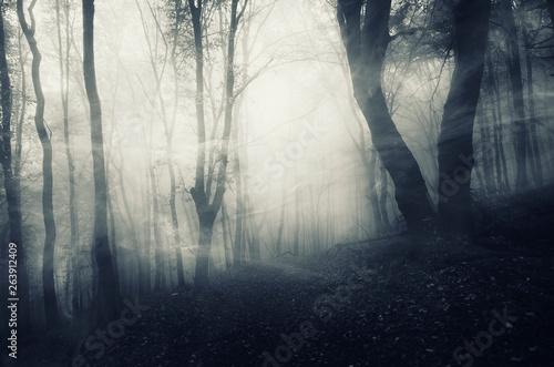 Foto auf AluDibond Schwarz mysterious forest landscape, wind blowing through trees in dark foggy landscape