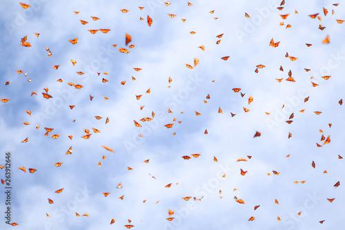 Fotografie, Obraz Natural summer background