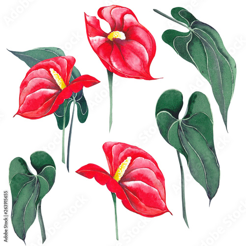 Set of anthurium flowers with leaves Canvas Print