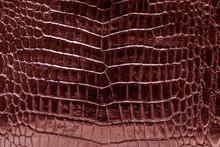 Glossy Red Crocodile Skin Texture Background.