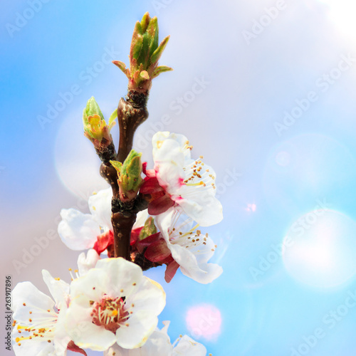 Photo  Blooming gardens in spring
