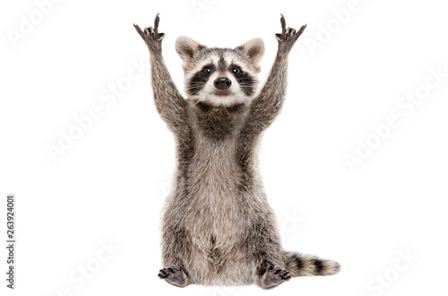 Funny raccoon showing a rock gesture isolated on white background Fototapete