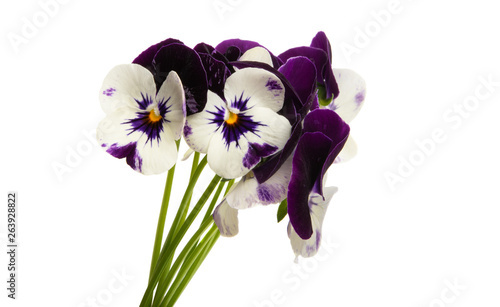 Papiers peints Pansies pansy isolated