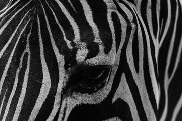 an eye of zebra in black and white