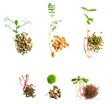 Set Of Micro Greens Isolated O...