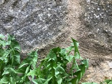 Background Structure - Green Dandelion And Old Stone Wall-03
