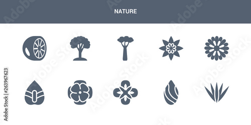Photo 10 nature vector icons such as acicular, almond, alstroemeria, anemone, anthurium contains aster, astrantia, baobab, beech, bergamot