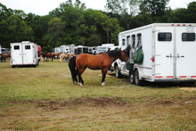 Brown Horse Feeding & Tied To The Back Of A Trailer