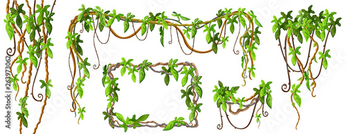Liana branches and tropical leaves Canvas Print