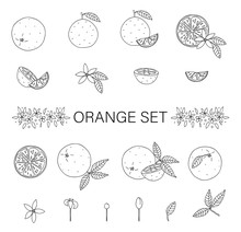 Vector Black And White Set Of Oranges Isolated On White Background. Monochrome Collection Of Citrus Fruit, Leaves, Flowers, Twigs. Fresh Food Illustration