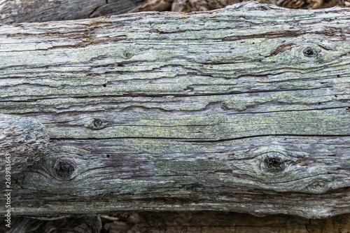 Gnarly Decaying Wood Close-up 4 Canvas-taulu