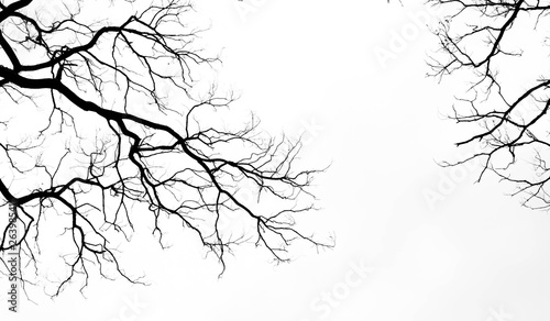 Fototapeta Bare tree branches on a pale white background obraz