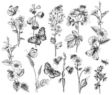 Hand Drawn Wild  Flowers And I...