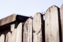 Perspective View Of Wooden Planks And Steel Cable Line With A Blurted Barn In The Background – Closeup Of Pointy Fence With Rusty Barbed Wire On Top – Concept Background Of Security And Protection