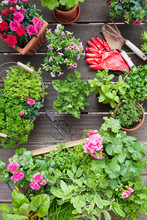 Planting Herbs And Flowers For Indoor Farming On A Balcony