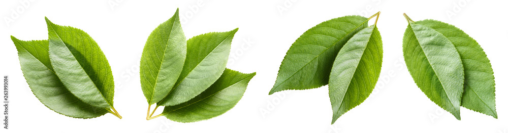 Fototapety, obrazy: Set of green leaves, isolated on white background