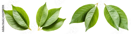 Set of green leaves, isolated on white background
