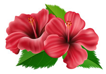 Pink Hibiscus Flower With Green Leaf For Summer. Vector Illustration Isolated On White Background, For Exotic Summer Party And Tropical Nature Design
