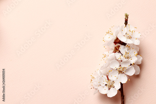 Spring floral background, texture and wallpaper Canvas Print