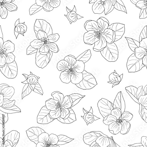Poster Floral black and white Seamless background of hand-drawn apple blossom, coloring page