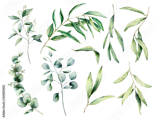 Fotografiet  Watercolor set with olive and eucalyptus branch, leaves