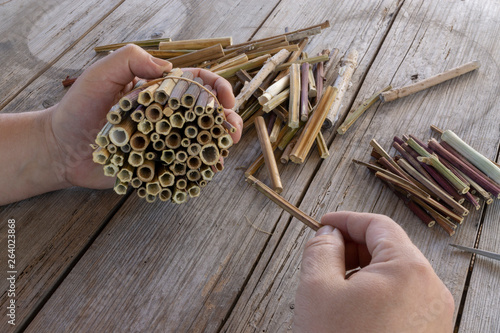 Do it yourself insect hotel made from hollow plant stalks #264023868