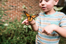 Boy Holding Monarch Butterfly ...