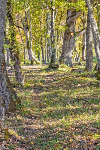 Footpath in a sunny autumn oak grove © HaiGala