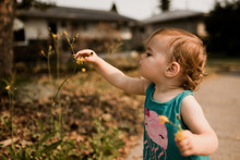 Little Girl With Brown Hair Collecting Yellow Flowers