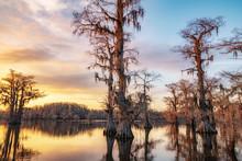 Bald Cypress Trees On Caddo Lake During Sunset