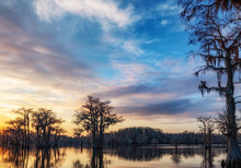 Silhouette Of Bald Cypress Trees During Sunset At Caddo Lake On A Cloudy Day