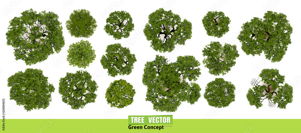 Fototapety, obrazy: Trees top view for landscape vector illustration.