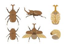 カブトムシのイラストセット/6形態/オス、メス、縦位置、横位置、飛翔、幼虫、さなぎ