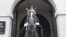 Cavalryman Of The British Royal Guard.
