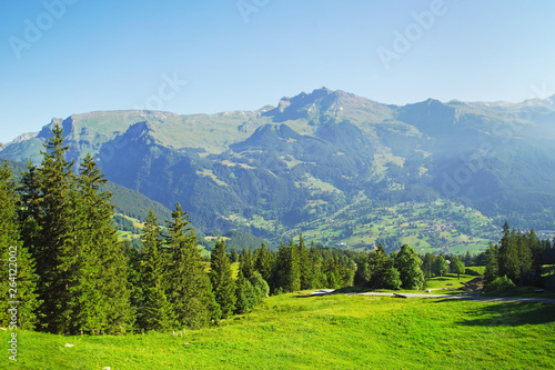 Fototapeta Alpine peaks of Grindelwald and Jungfrau. Landskape background of Bernese highland. Alps, tourism, journey, hiking concept. obraz