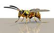 3d Wespe, Insekt freigestellt