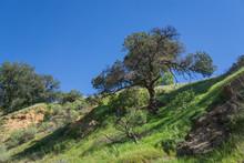 Tree Grows On Green Canyon Rim