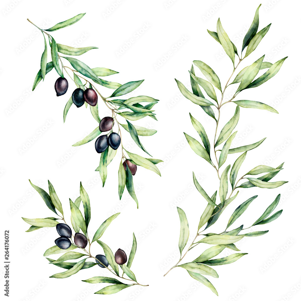 Fototapety, obrazy: Watercolor olive tree branch set with leaves and black olives. Hand painted floral illustration isolated on white background for design, print, fabric or background.