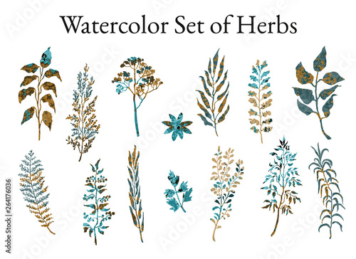 Photo  Vector colorful illustration set of herbs, plants and flowers