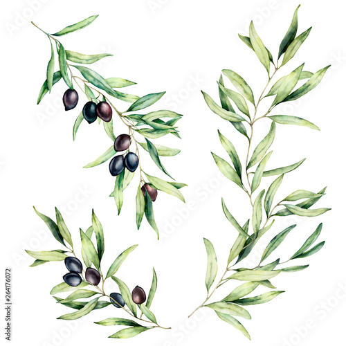 Watercolor olive tree branch set with leaves and black olives Slika na platnu