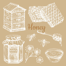 Hand Sketched Honey Vector Elements - Bee, Honeycombs, Jars. Illustration Of Hand Sketched Honey And Flower