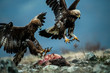 Adult and juvenile Golden Eagle (Aquila chrysaetos) on prey at mountain meadow in Eastern Rhodopes, Bulgaria