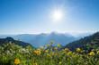 Trollblumen am Herzogstand mit Aussicht in die bayerischen Alpen